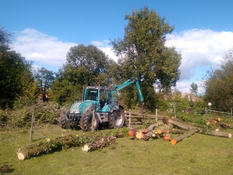 Démarrage d'une opération d'abattage d'arbres vieillissants à Fegergsheim