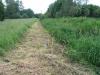 Dégagement des plantations